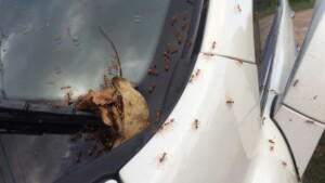 How To Get Rid Of Ants Inside Your Car